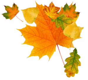 autumn_leaves_png3612